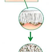 delovanje vlakna-01-01